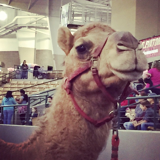 Met this little guy last night, he wanted to remind you what day it is. #humpday